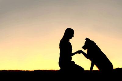 Tierkommunikation - Der neue Draht zu Ihrem Liebling
