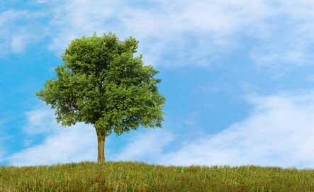 Ulme - Das keltische Baumhoroskop